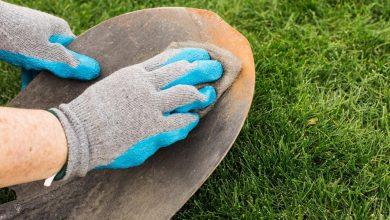 Photo of How To Clean Garden In Winter