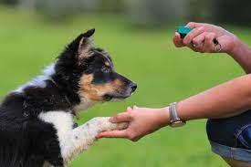 Photo of Benefits of Dog Training