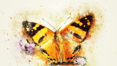 Photo of Amazing Butterfly Drawing For Kids