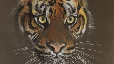 Photo of Tiger Portrait drawing shouldn't be hard read those step to draw