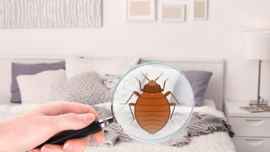 Photo of DIYs to Help you to Get Rid of Bed Bugs Problems